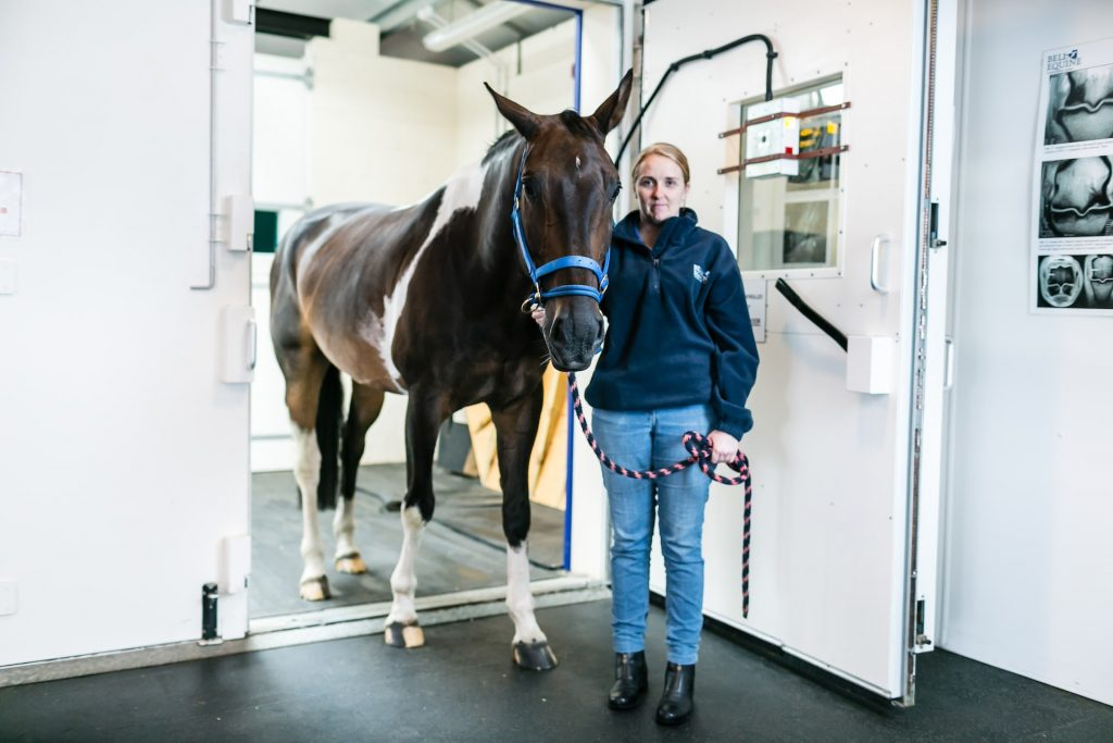 A vet with a horse in an MRI scanning room