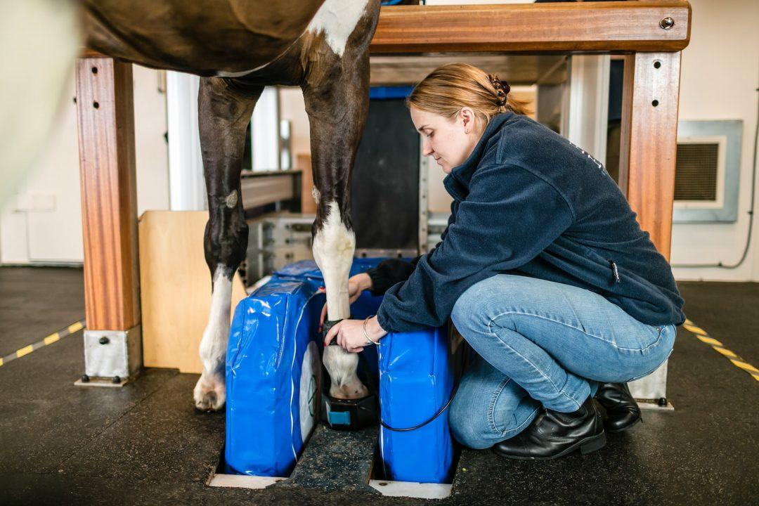 MRI operator, managing horse in Equine MRI scanner