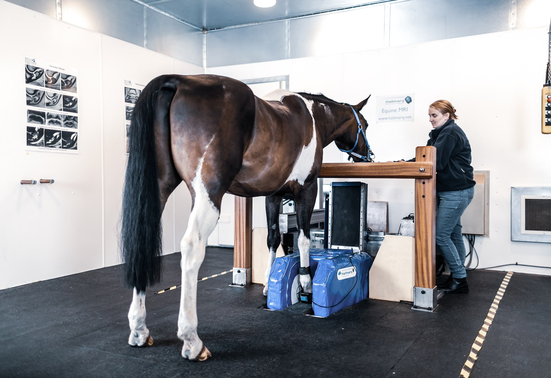 Equine MRI, standing MRI for Horses
