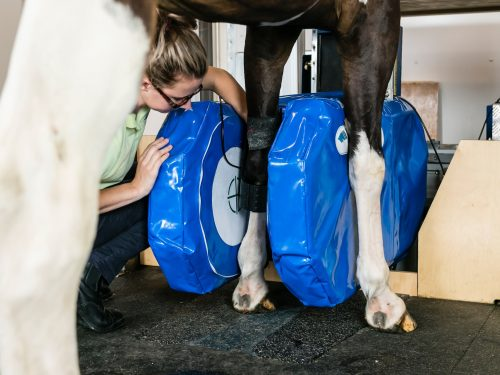 Horse in Equine MRI scanner