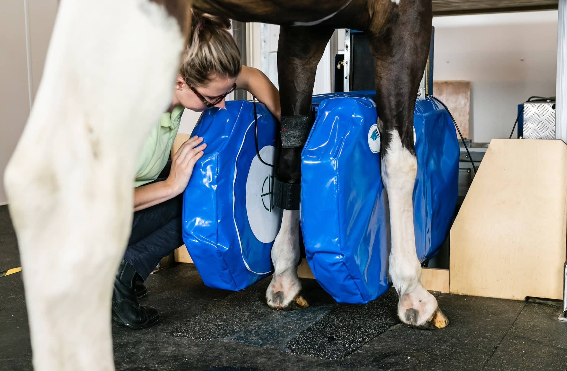 Equine MRI scanner. Show horse being scanned in Hallmarq specialist imaging scanner