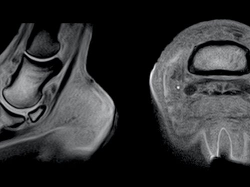 An equine MRI scan image of a joint