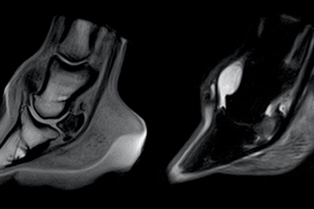 An Equine MRI scan