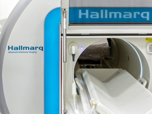 Small Animal MRI Machine