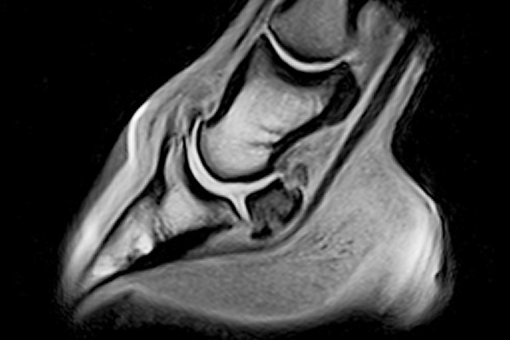 An Equine MRI scan image