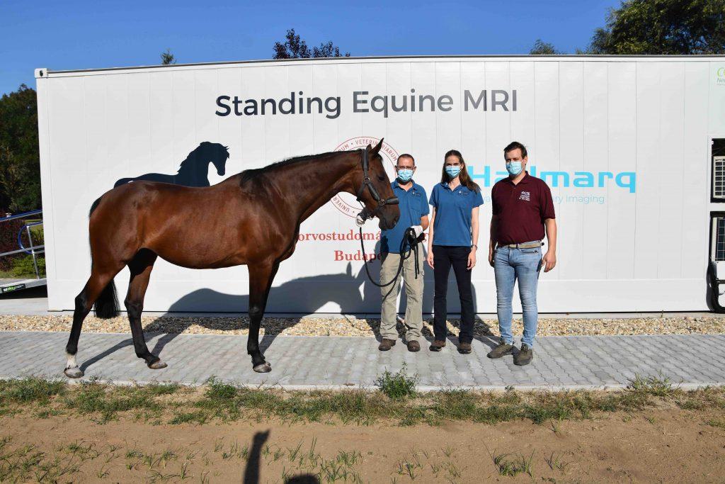 The University of Veterinary Medicine Budapest now offers Standing Equine MRI - Hallmarq Advanced Veterinary Imaging  www.hallmarq.net