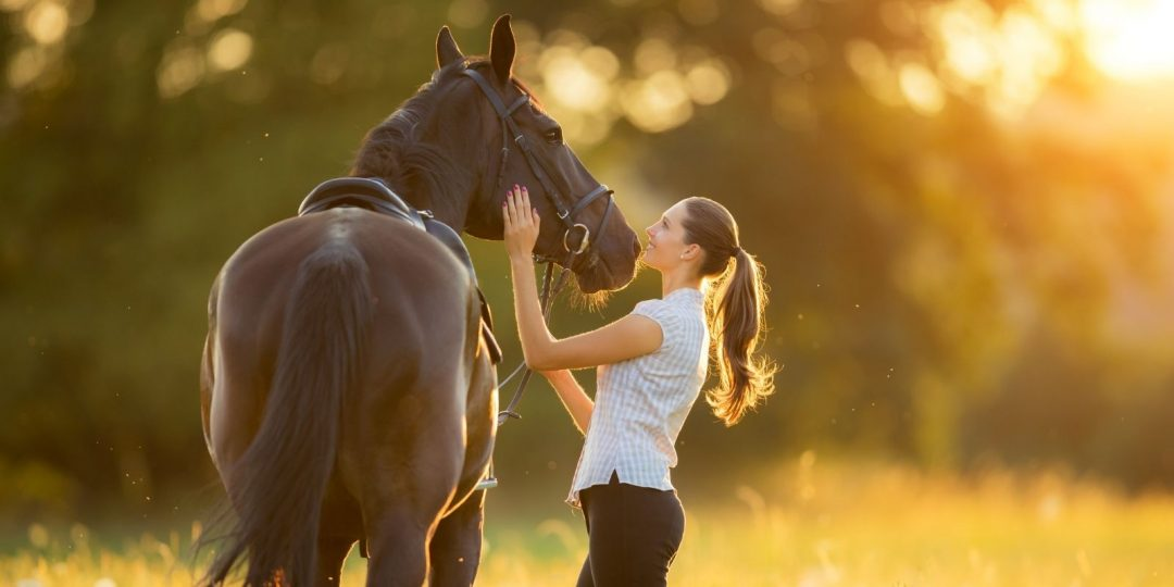 The Advantages of Standing MRI Scans for Horses
